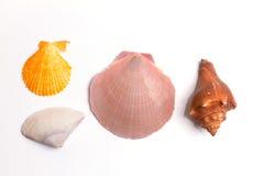 背景是剪报收集详细资料被找到的高我的路径照片投资组合解决方法贝壳对白色 免版税库存图片