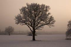 背景有薄雾的唯一结构树 免版税图库摄影
