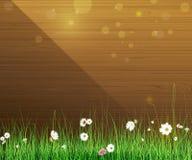 背景本质空间您春天的文本 绿草和叶子植物、白色大丁草,雏菊花和阳光在木篱芭 库存照片