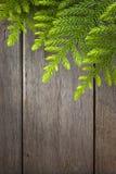 背景杉树木头 库存照片