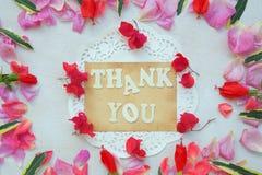 背景构成旋花植物空白花的郁金香 免版税库存照片