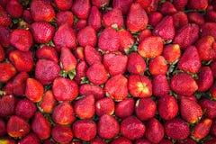 背景果子查出的草莓白色 图库摄影