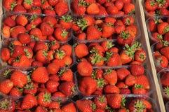 背景果子查出的草莓白色 库存图片