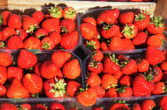 背景果子查出的草莓白色 免版税库存图片
