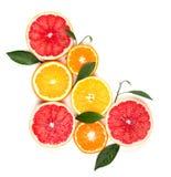 背景柑橘水果查出白色 被隔绝的柑橘水果 被隔绝的柠檬、粉红色葡萄柚和桔子片断  库存照片