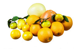 背景柑橘白色 免版税库存图片