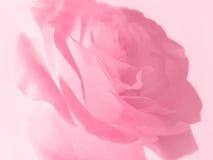 背景柔和的粉红色上升了 库存照片