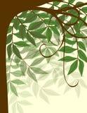 背景柔和的结构树 库存照片