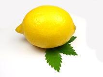背景柠檬白色 免版税库存照片