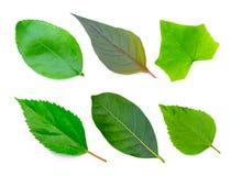 背景查出的叶子叶子设置了结构树空白 图库摄影