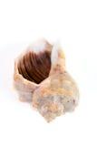 背景查出的壳螺旋白色 图库摄影