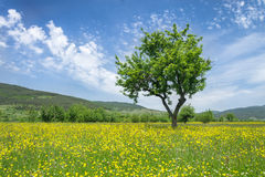 背景查出的春天结构树白色 免版税库存照片