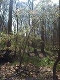 背景查出的春天结构树白色 库存图片