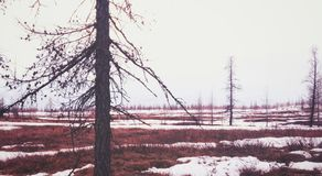 背景查出的春天结构树白色 免版税图库摄影