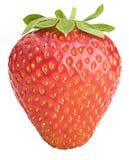 背景查出的红色草莓白色 免版税库存图片