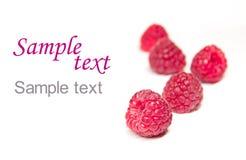 背景查出的莓白色 免版税库存照片