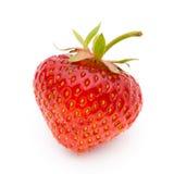 背景查出草莓白色 新鲜的浆果 免版税图库摄影