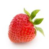 背景查出草莓白色 新鲜的浆果 库存图片