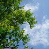 背景树天空 库存照片