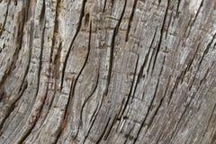 背景树巨大的土气被风化的木吠声纹理照片  库存图片