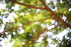 背景树bokeh摘要软绵绵地浅绿色的模糊的森林,绿色明亮自然图表的抽象派 库存照片