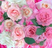 背景桃红色玫瑰 库存照片