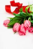 背景桃红色郁金香白色 免版税库存照片