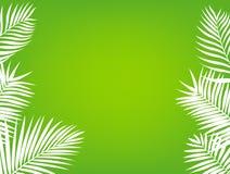 背景框架棕榈树 免版税库存图片