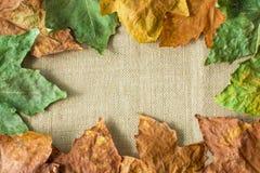 背景框架老肮脏弄湿了叶子 秋天概念查出的白色 免版税库存图片