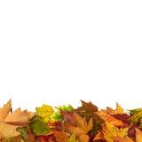 背景框架隔绝了五颜六色的秋叶婚礼聚会我 库存照片