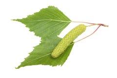 背景桦树装饰例证小树枝春天 免版税库存图片