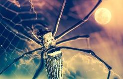 背景棒万圣节月光附注 特写镜头蜘蛛和夜空与充分的moo 免版税库存照片