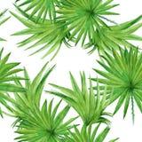 背景棕榈树叶子 无缝的模式 水彩illust 库存图片