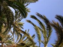 背景棕榈树 库存图片