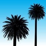 背景棕榈树 免版税库存照片
