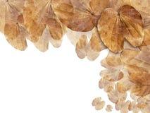 背景棕色干燥叶子页万维网 免版税库存照片
