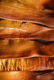 背景棕色种子美国梧桐 库存照片