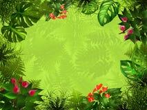 背景森林光 库存图片