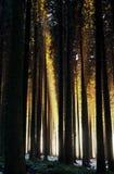 背景森林有薄雾的本质 库存图片