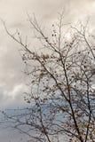 背景森林本质木雪的结构树 在多云天空的分支剪影 库存照片