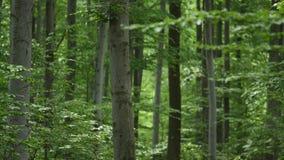 背景森林本质木雪的结构树 本质绿色木阳光背景 选择聚焦 库存图片