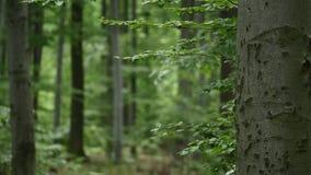 背景森林本质木雪的结构树 本质绿色木阳光背景 选择聚焦 库存照片
