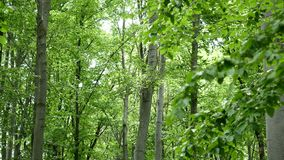 背景森林本质木雪的结构树 本质绿色木阳光背景 免版税图库摄影