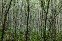 背景森林本质木雪的结构树 爱尔兰 库存图片
