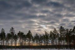 背景森林本质木雪的结构树 自然雪木头背景 冬天 免版税库存图片
