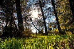 背景森林本质木雪的结构树 自然绿色木阳光 库存图片