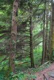 背景森林本质木雪的结构树 自然绿色木头 库存图片