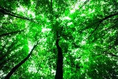 背景森林本质木雪的结构树 库存图片