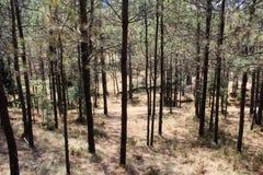 背景森林本质木雪的结构树 免版税库存照片