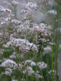 背景森林花自然白色 库存照片